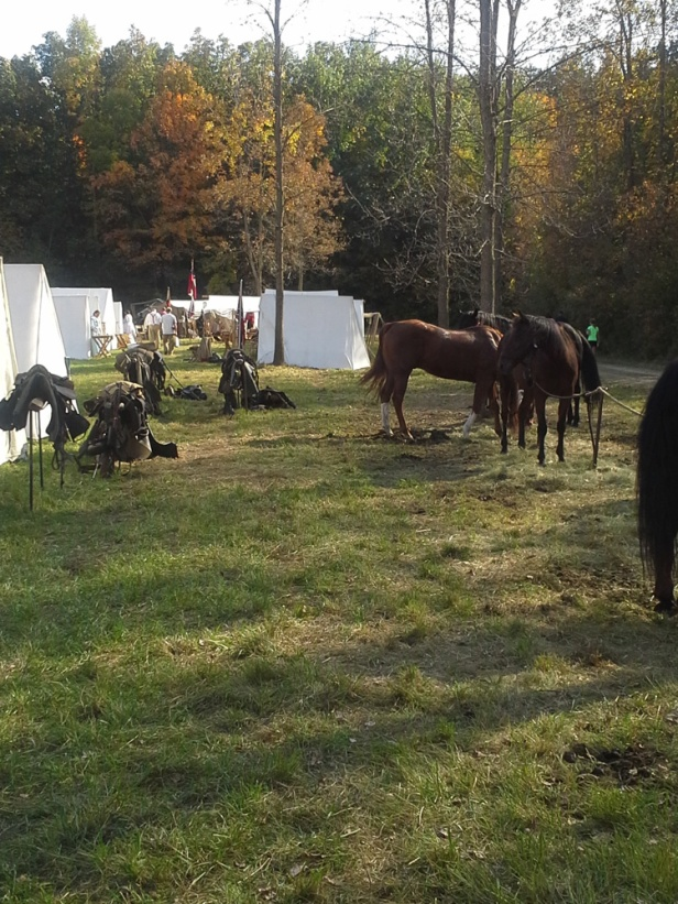 Лагерь конфедератов, лошади на привязи и разобранная упряжь